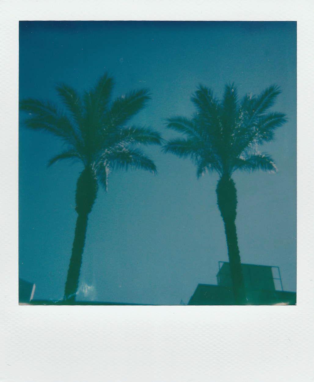 Palm Trees near Pavi, Qormi