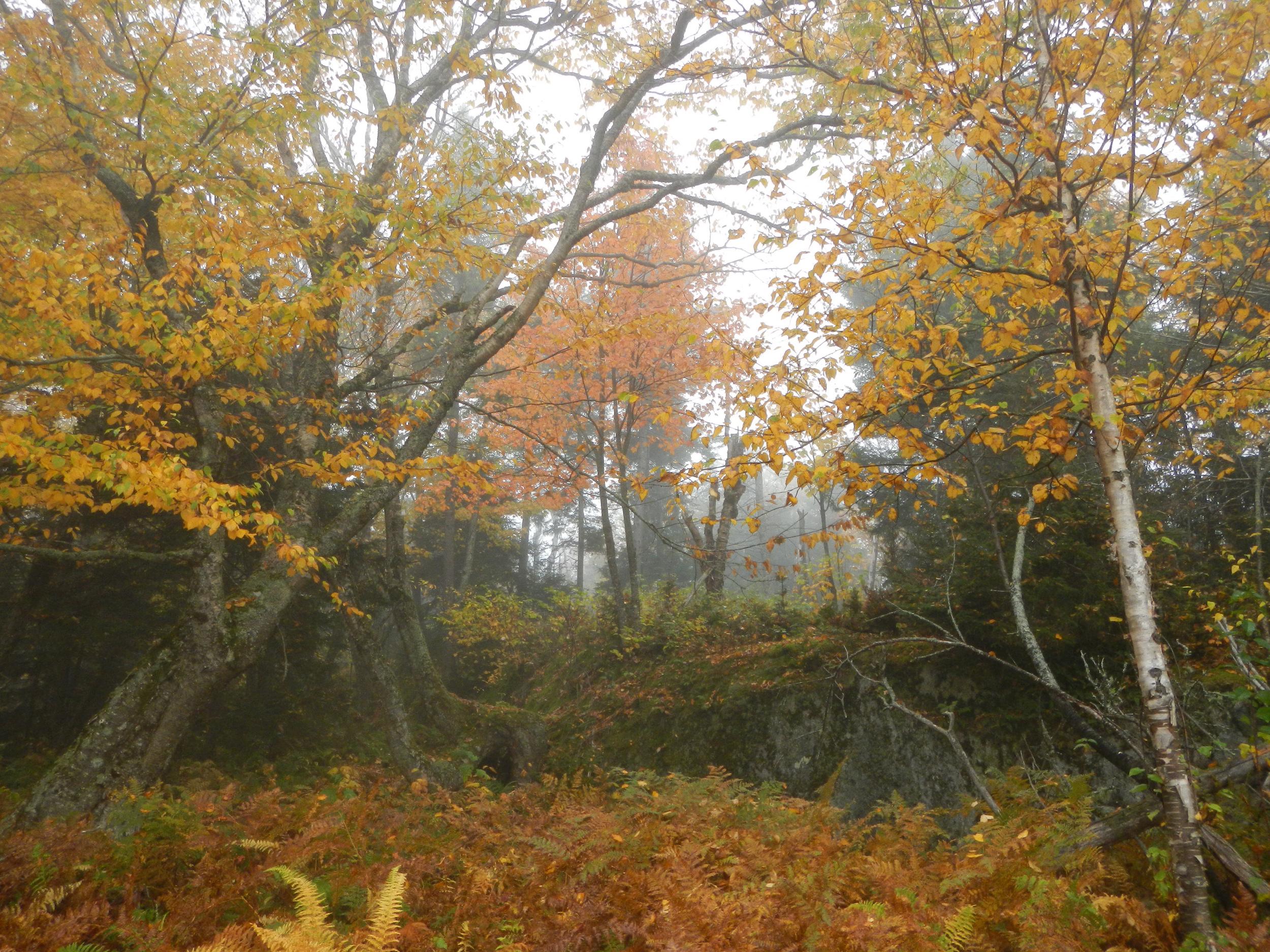 tree mist.jpg