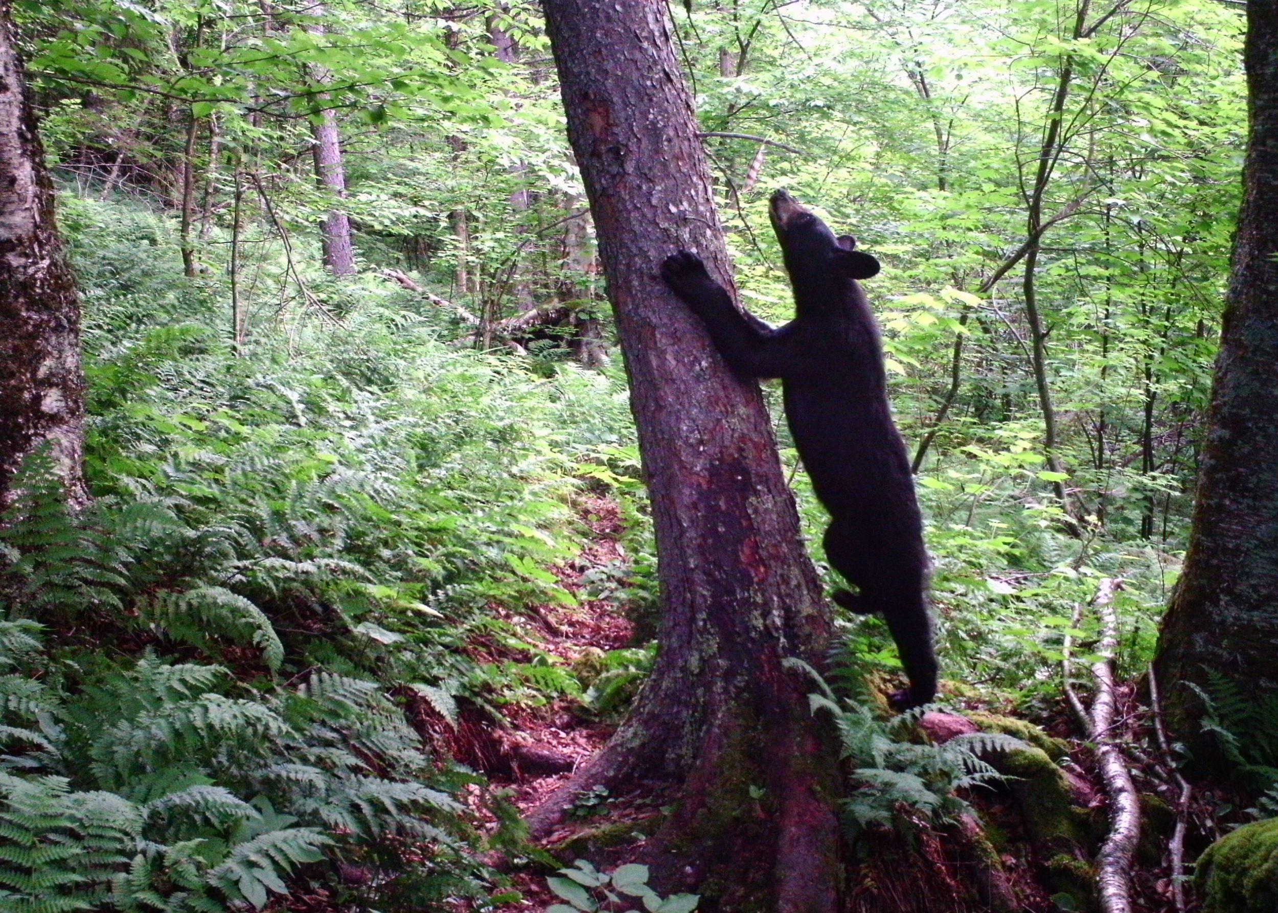 bear-cropped.jpg