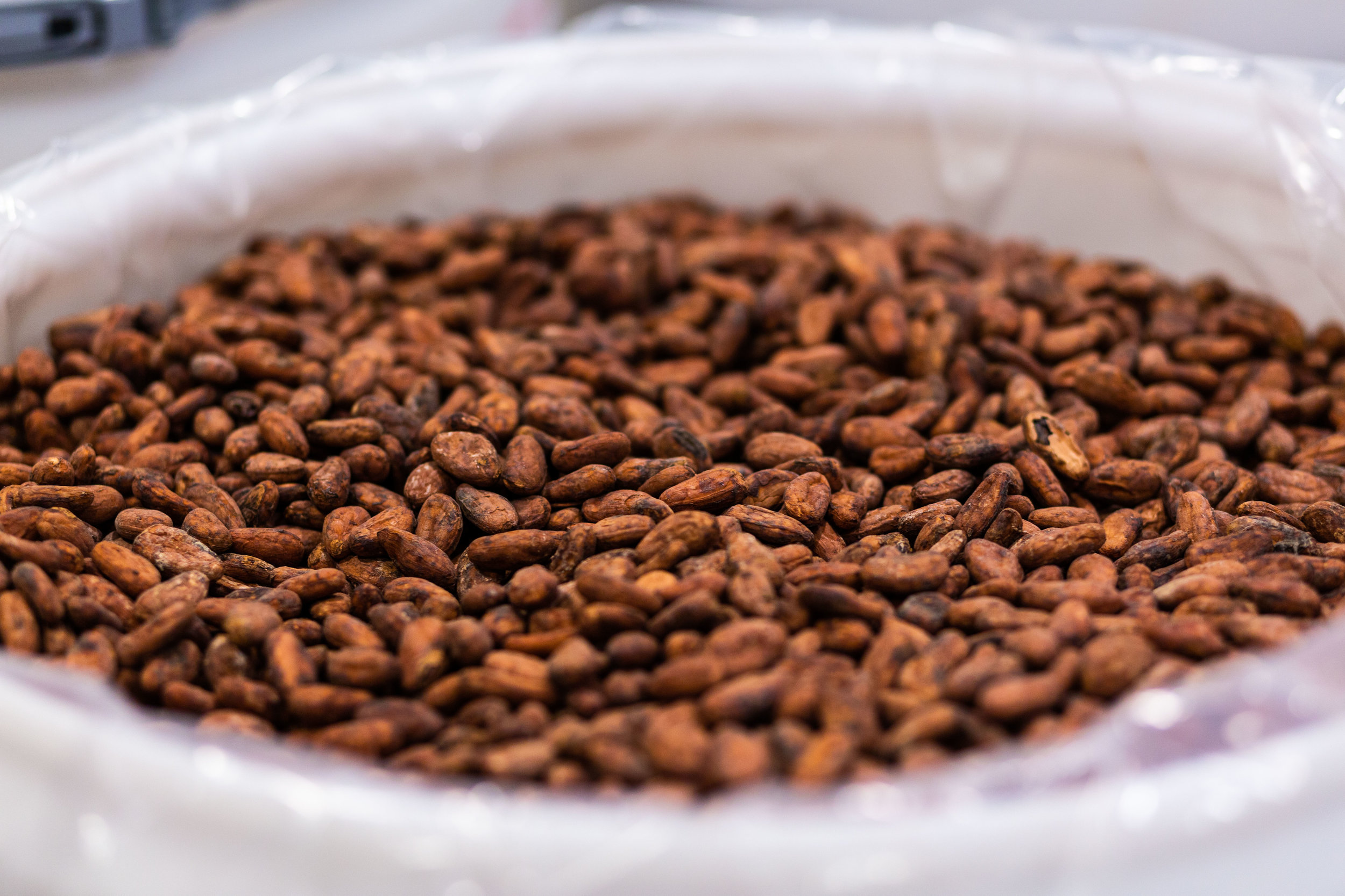 Cacao beans are processed and converted to a finished product in Sudbury