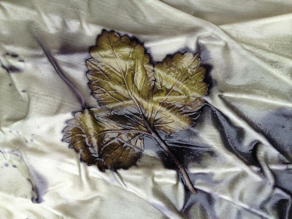 Leaf Print Natural Dye
