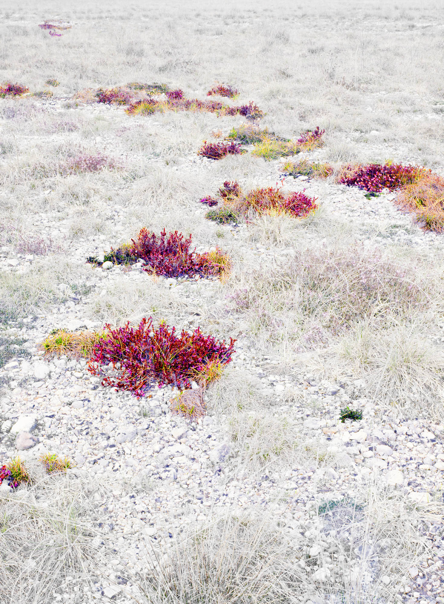 ANALYSIS OF THE HIDDEN FLOWERS.JPG