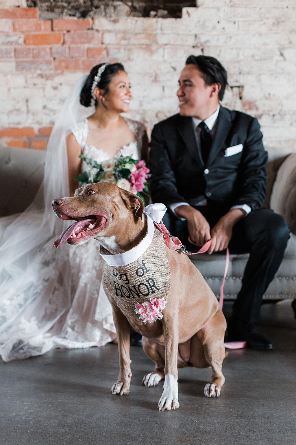 Industry-Indianapolis-Indiana-Wedding-Dog-of-Honor.jpg