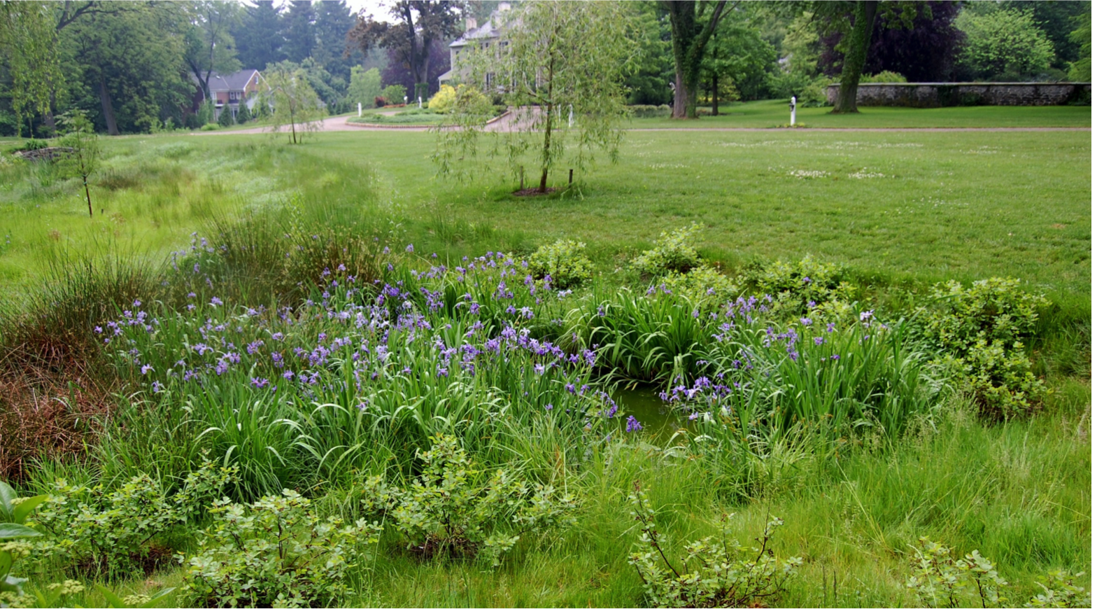 Restored streambank with a no mow zone and pocket wetlands enhanced with native species (c) LandStudies