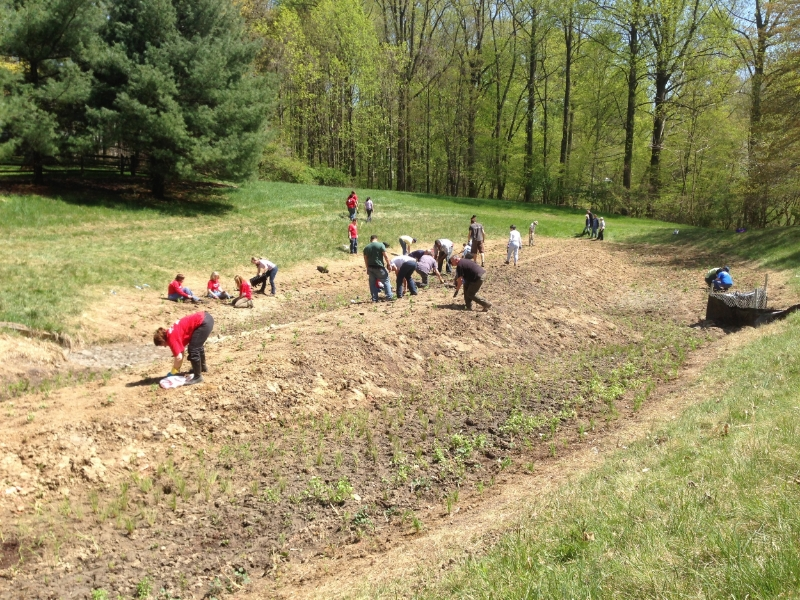 Volunteers installing small perennials in the stormwater basin after regrading of existing soil (April 2013).