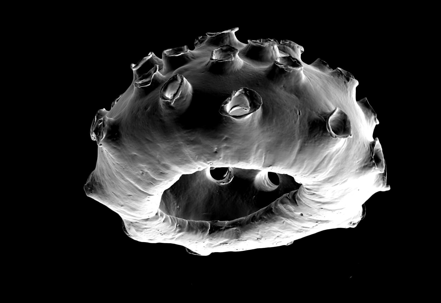 Dark Matter_1267_11-14-14.jpg