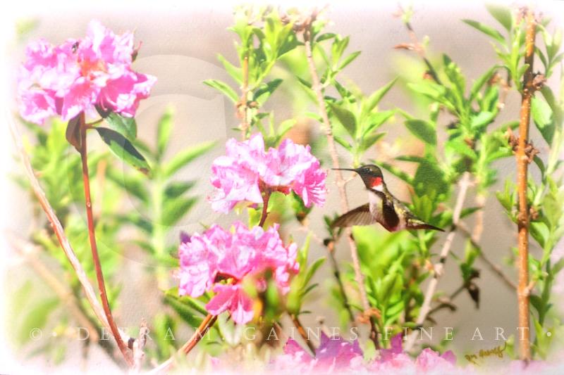 Hummingbird in Flight_0369_COPYWRITTEN.jpg