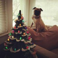 Lucy_Christmas_Bike_Tours_Victoria.jpg