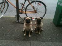 Lucy_Ruby_Bike.jpg