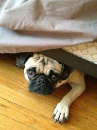 Lucy_under_bed.jpg