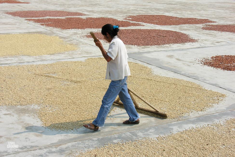 coffee drying in peru