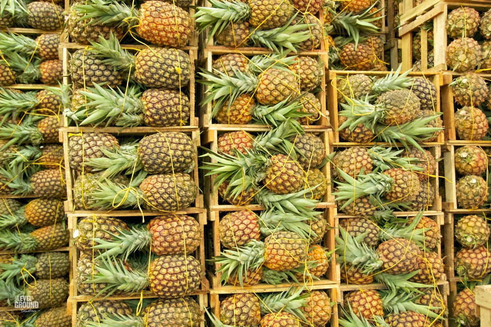 pineapples in colombia