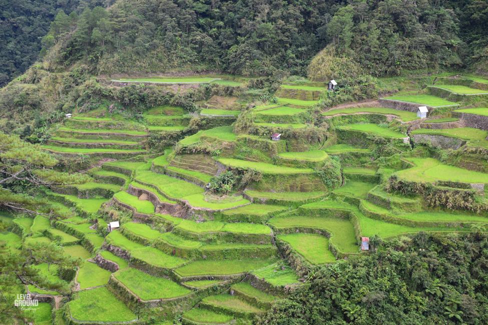 Cordillera rice paddies