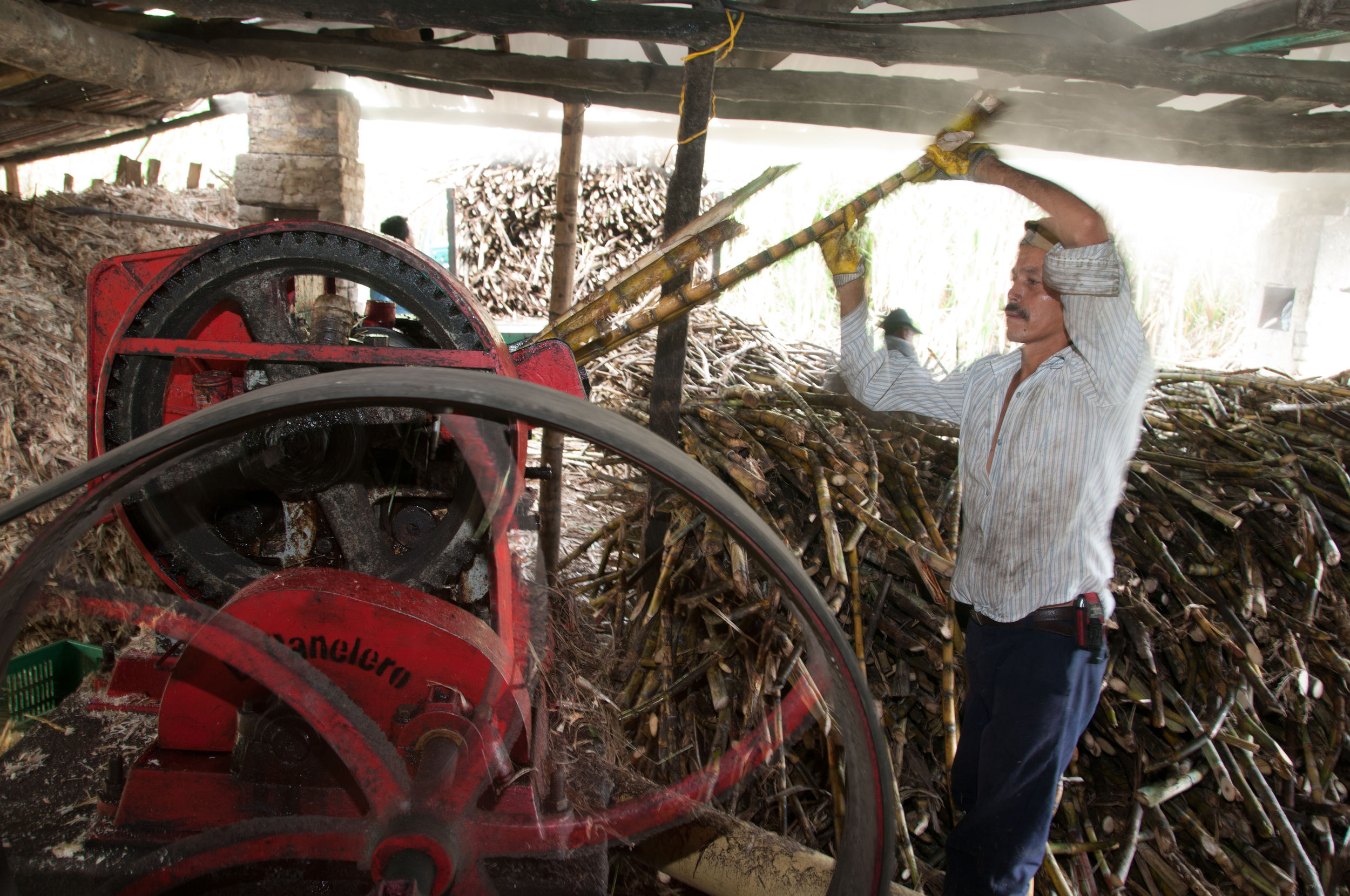 extracting sugar cane