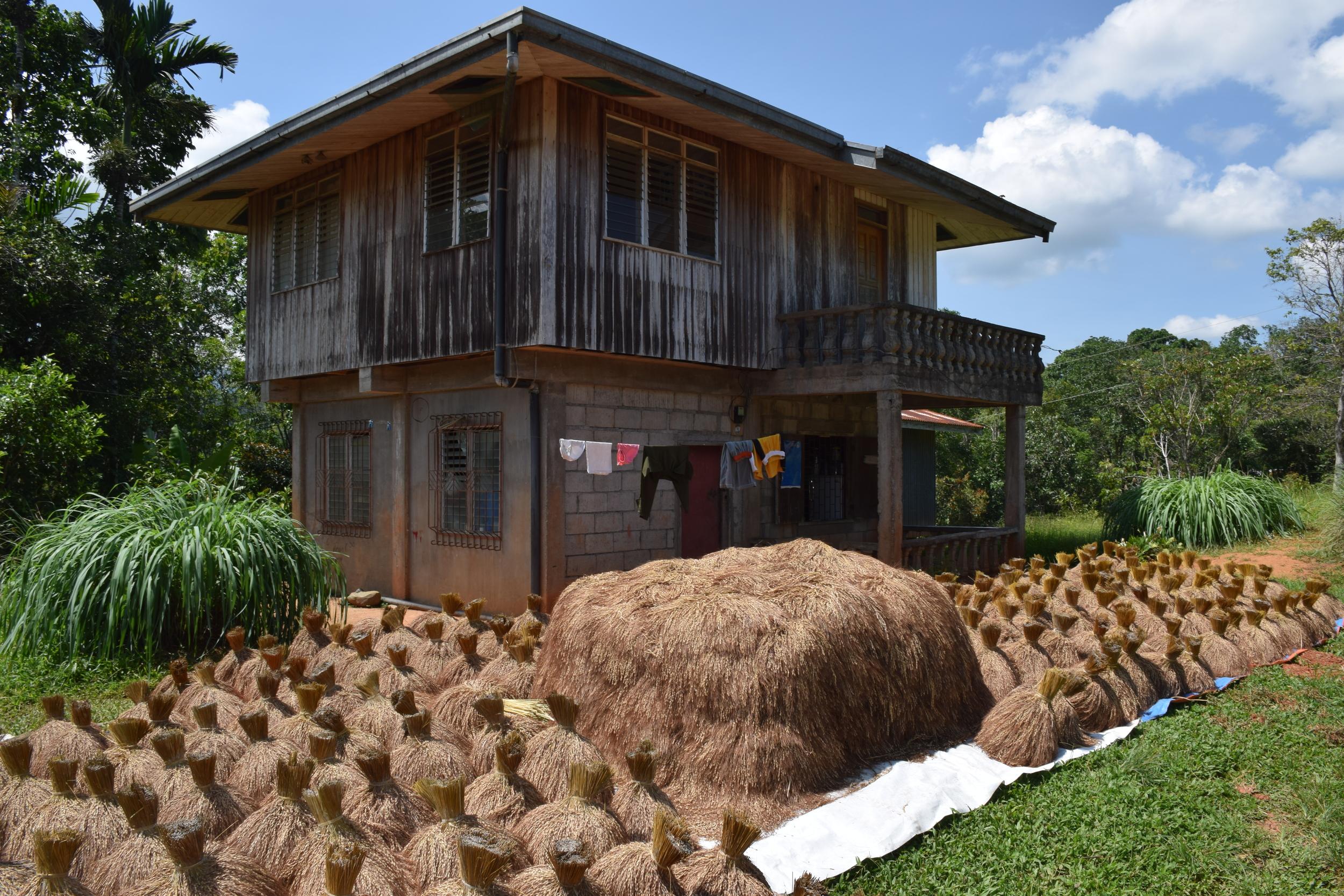 Rice drying