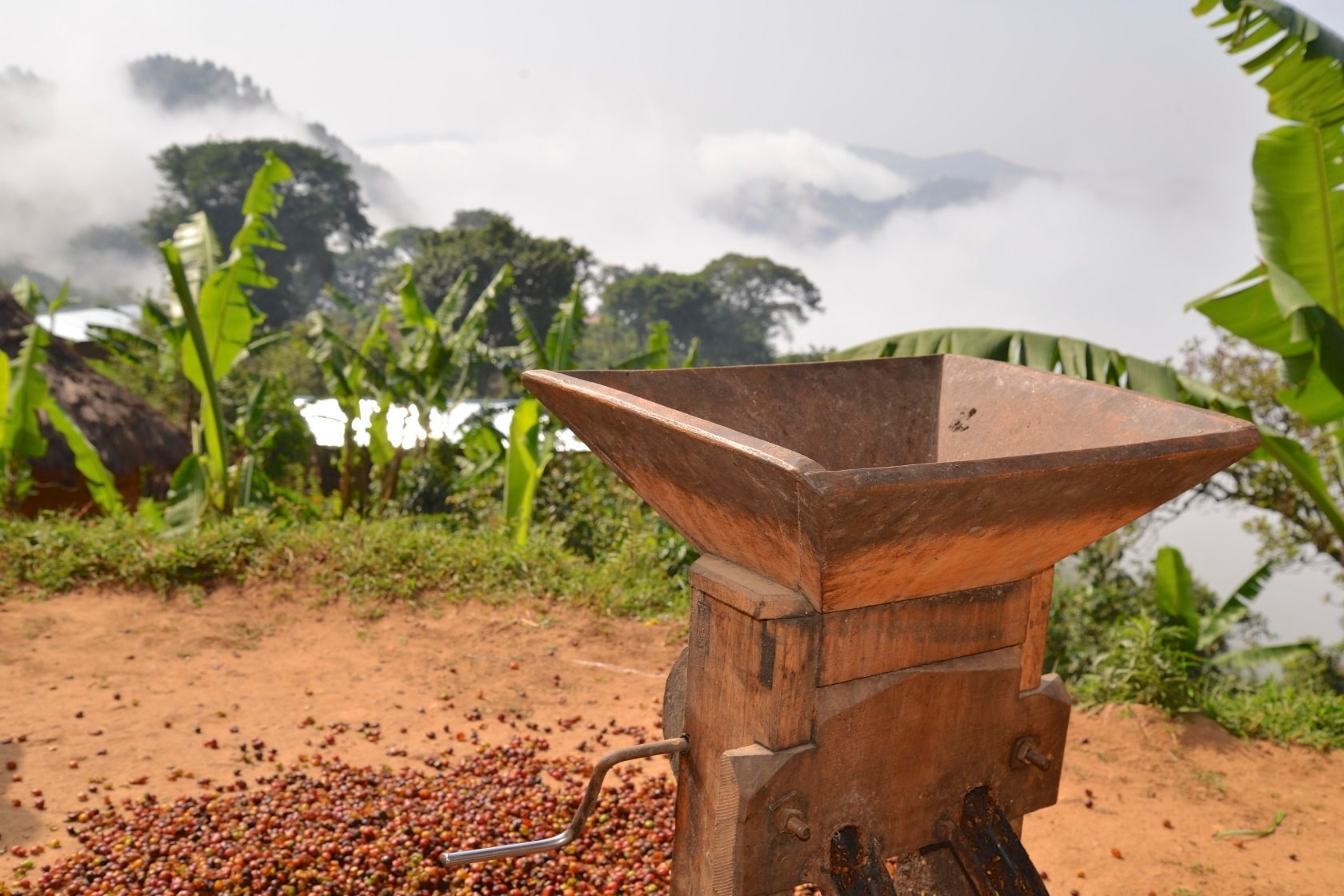 Coffee pulper in the Democratic Republic of Congo