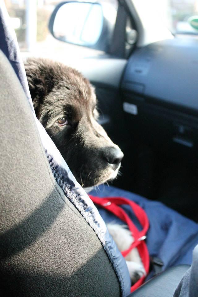 Pet Taxi Runcorn Dog Cat Vet Visit