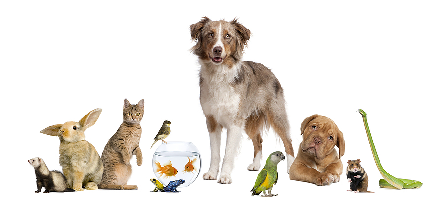 Pet Sitting Cats Dogs Fish Birds Runcorn