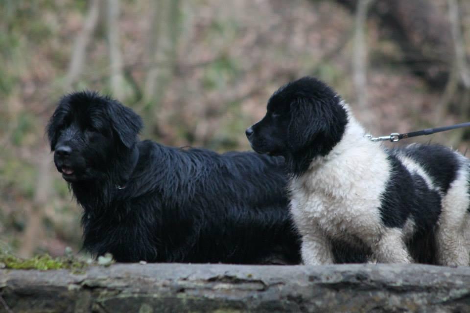 Bailey & Jenson.jpg