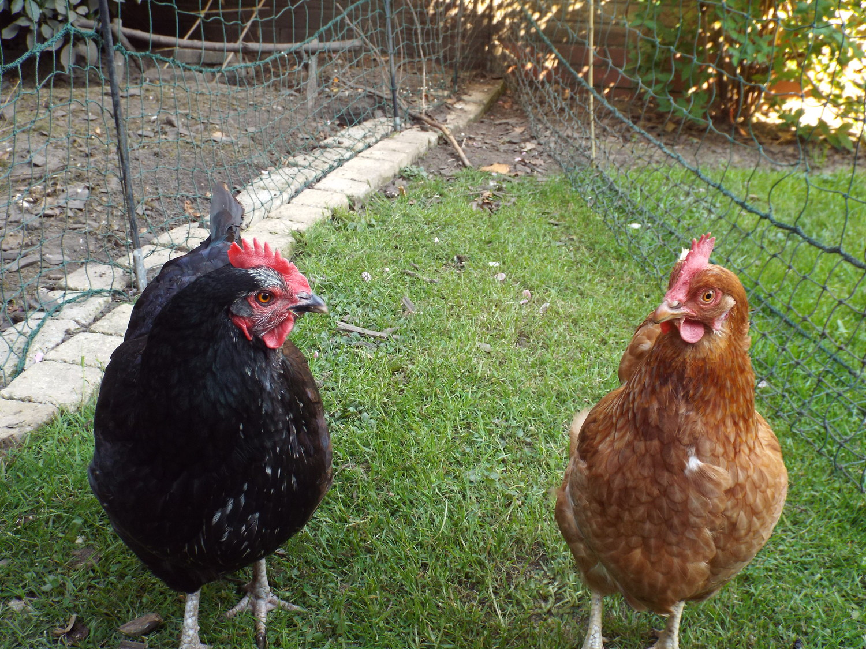 Blackie & Reddie 2.JPG