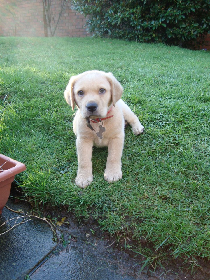 Puppy Paisley.jpg
