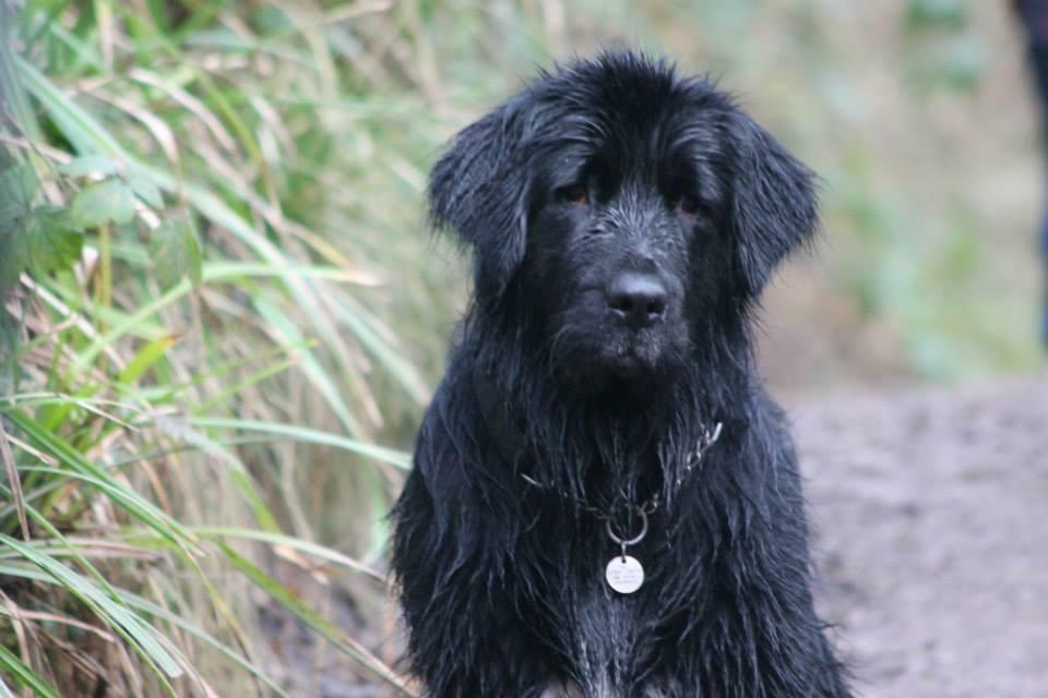 Wet Bailey.jpg