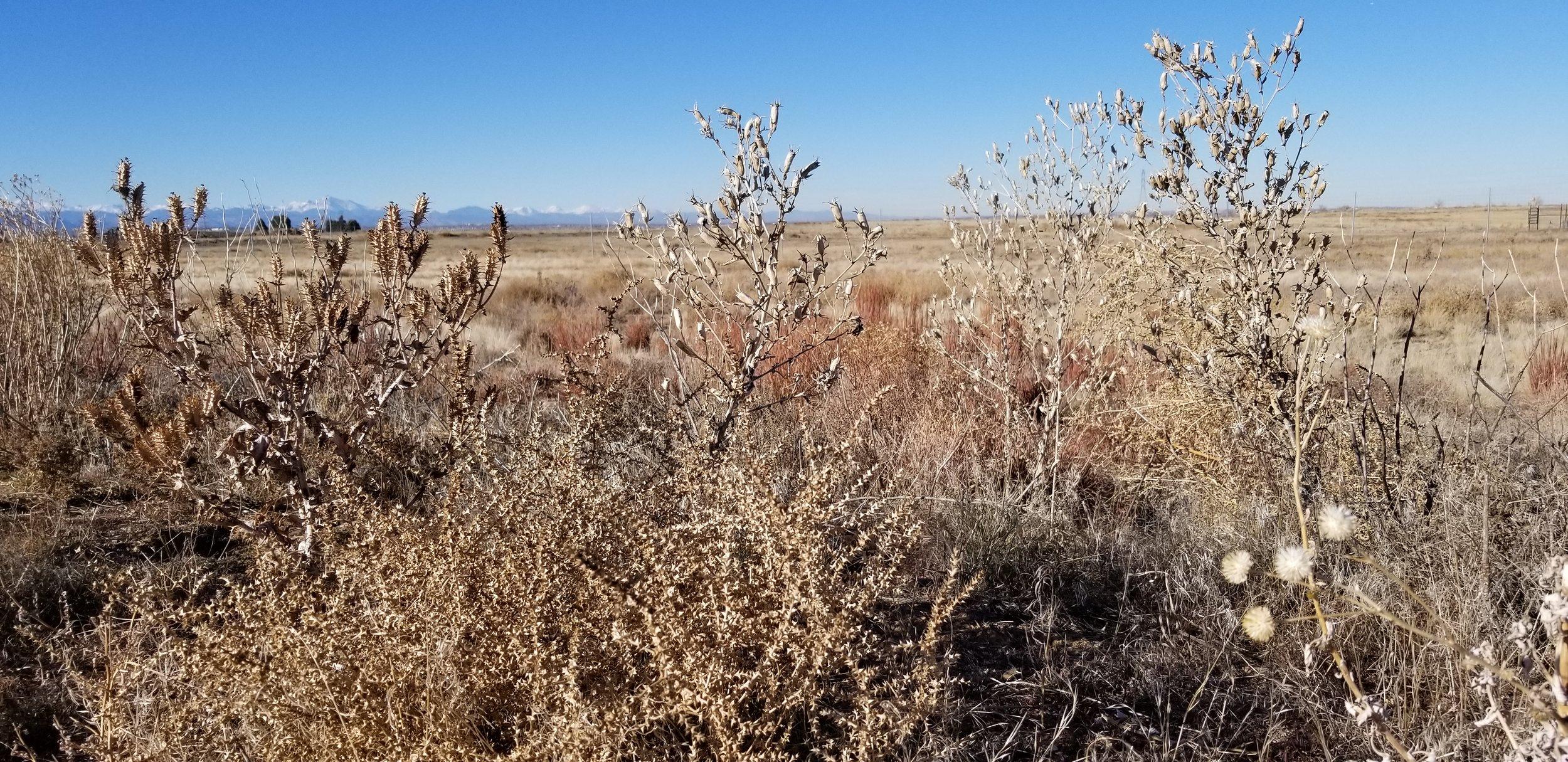 Dried plants add texture, habitat and food.