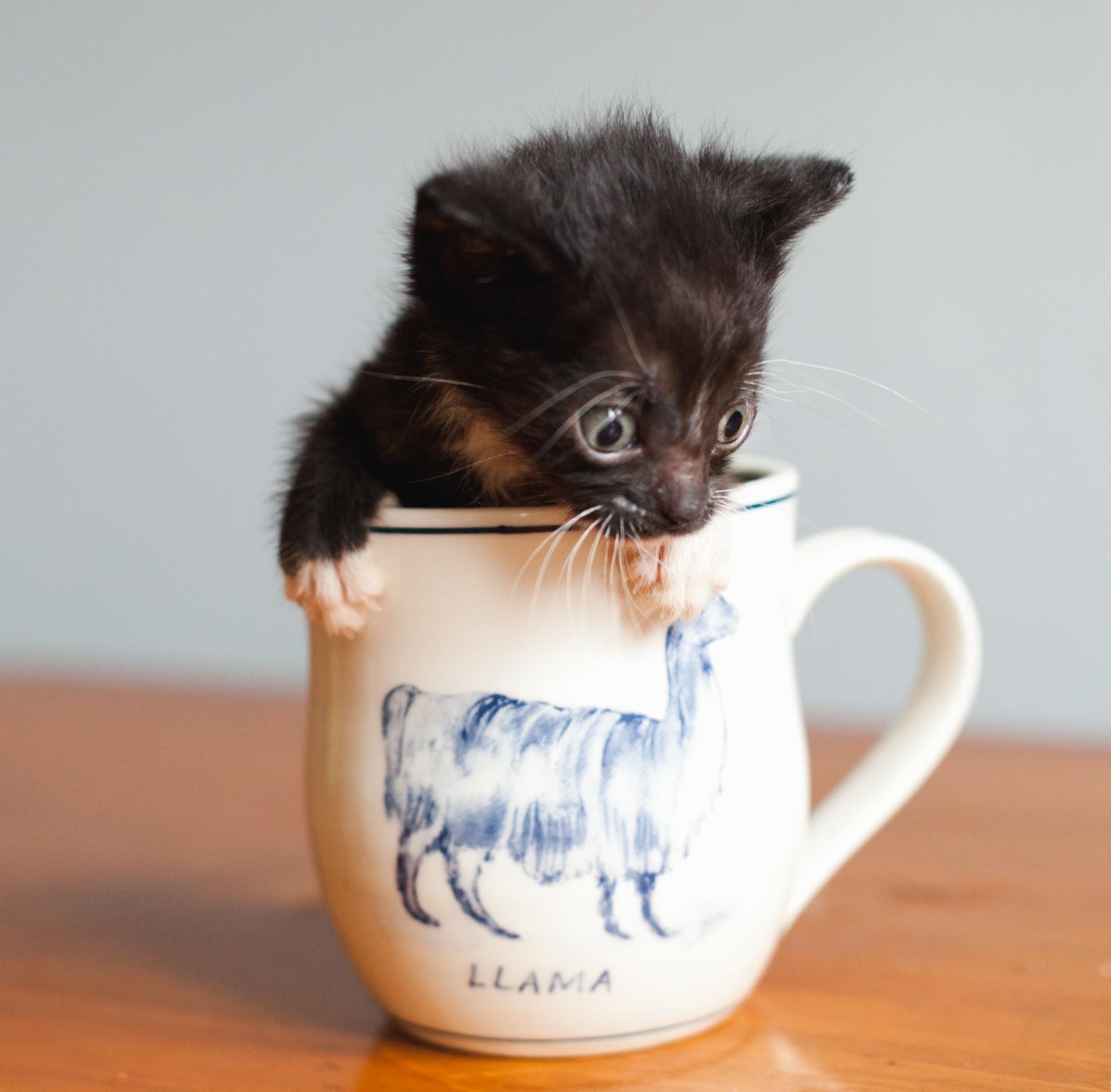 caa-kittens-55.jpg