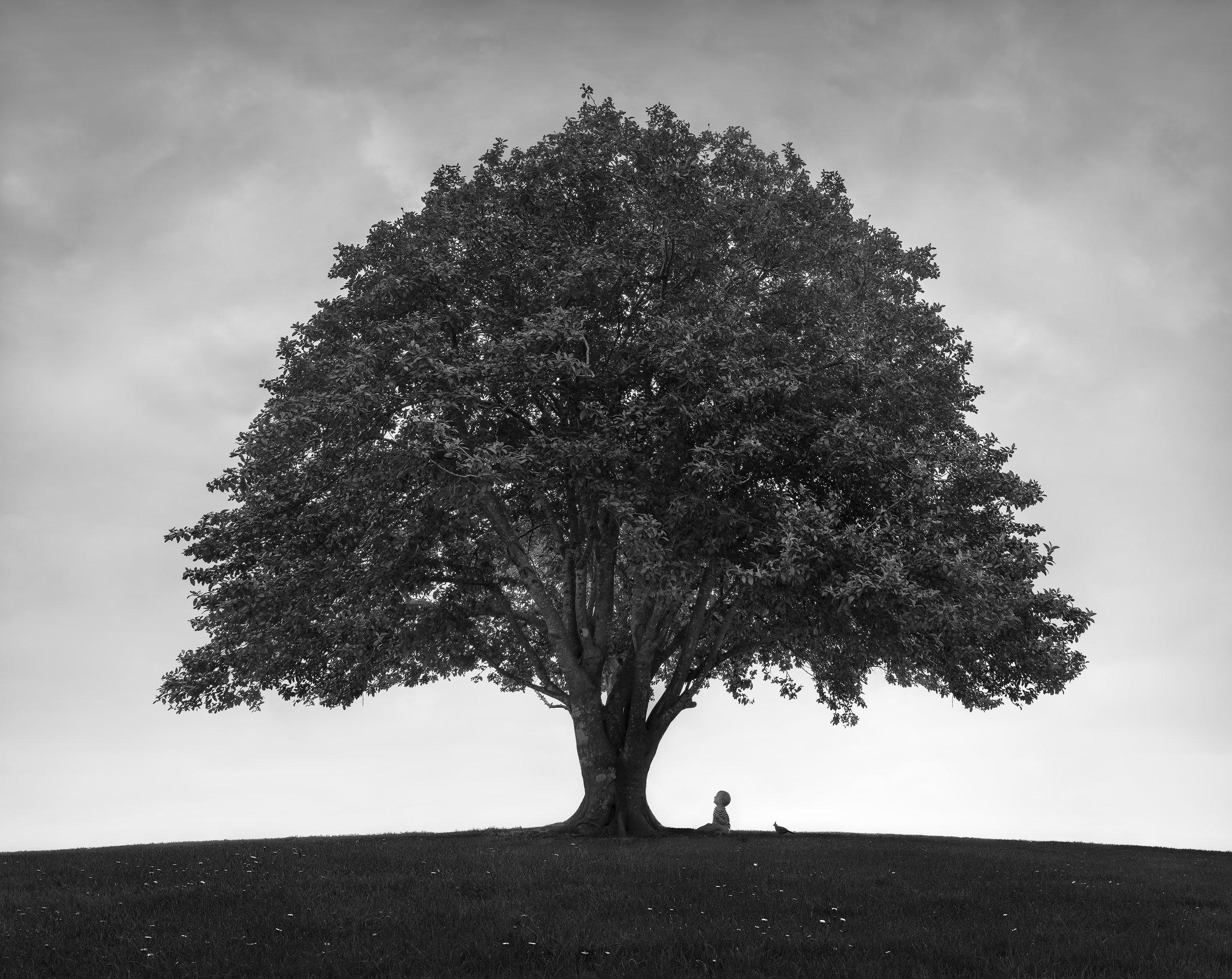 Lachlan - Tree of Life.jpg