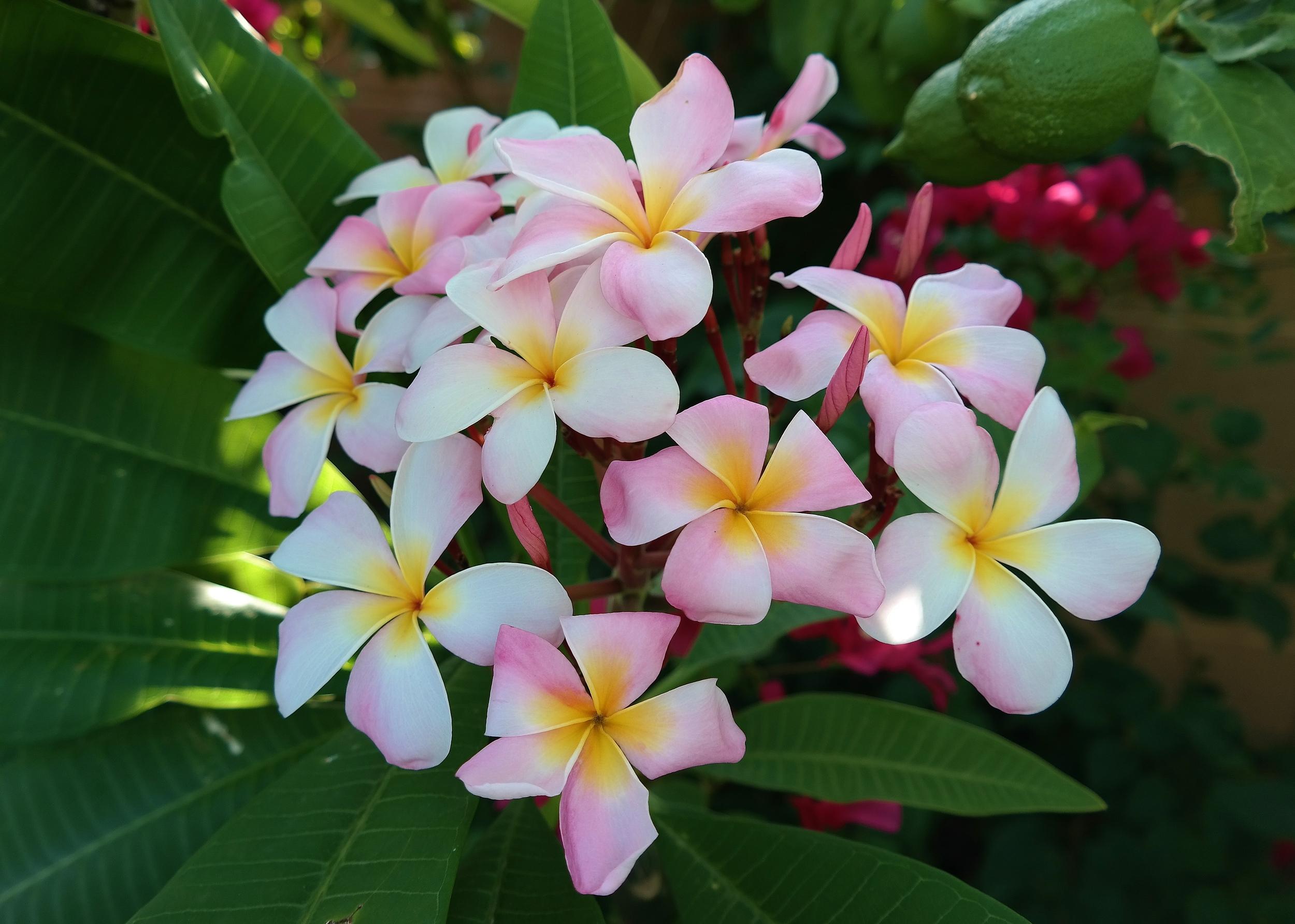 Cancun Pink