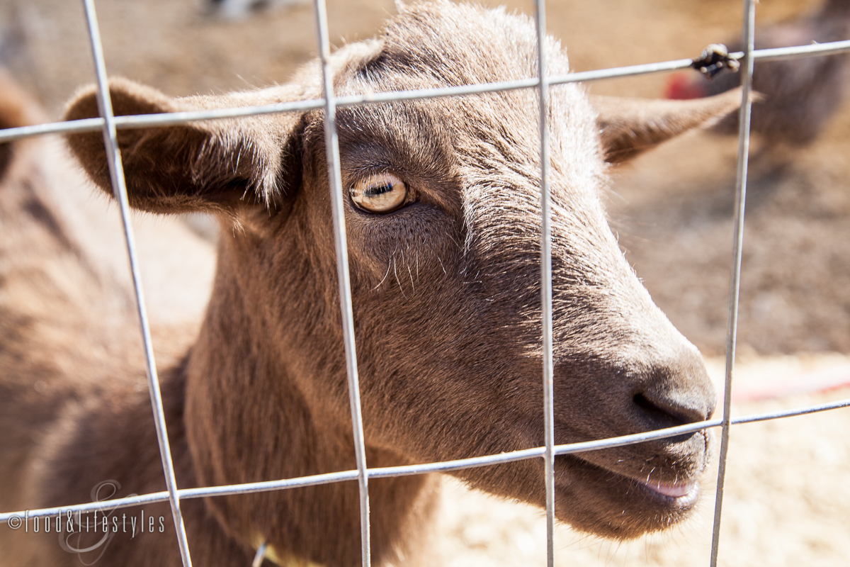 Blue Sky Farms ( all photos by Jenelle Bonifield of Food & Lifestyles)