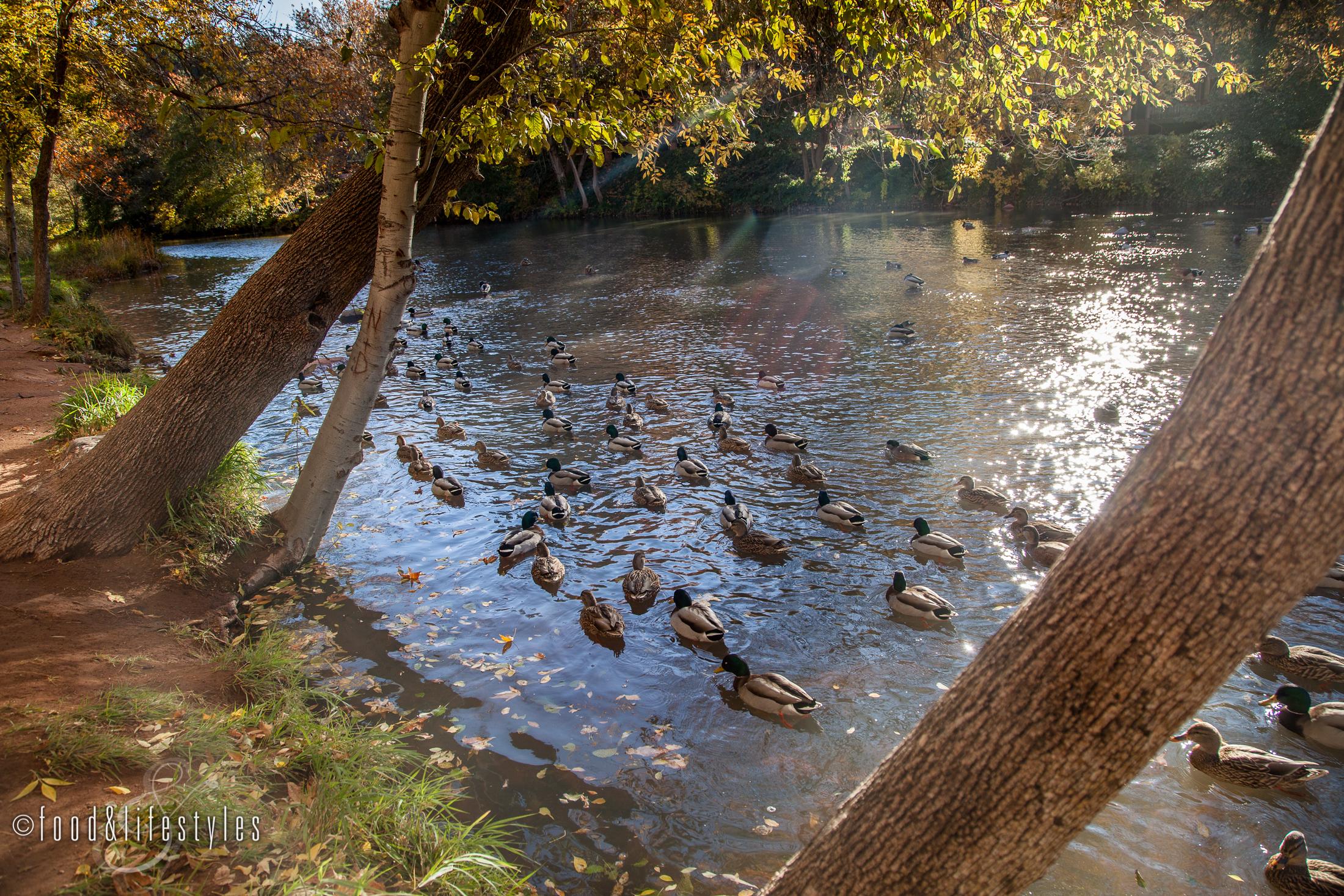 L'auberge de Sedona duck beach