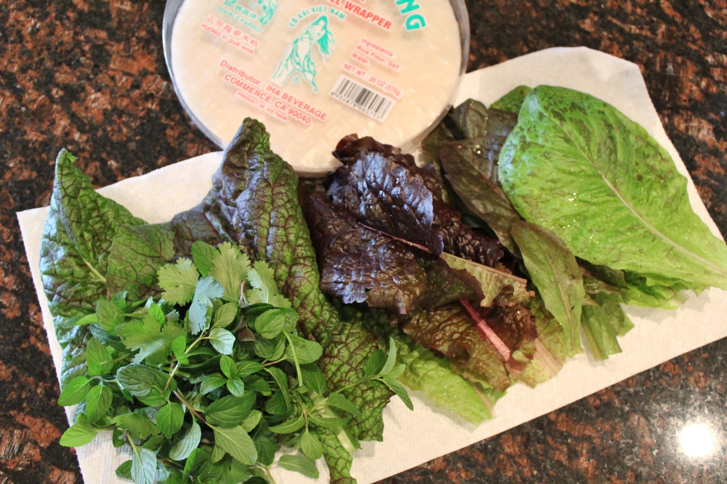 Gardening in Phoenix lettuce Outredgeous