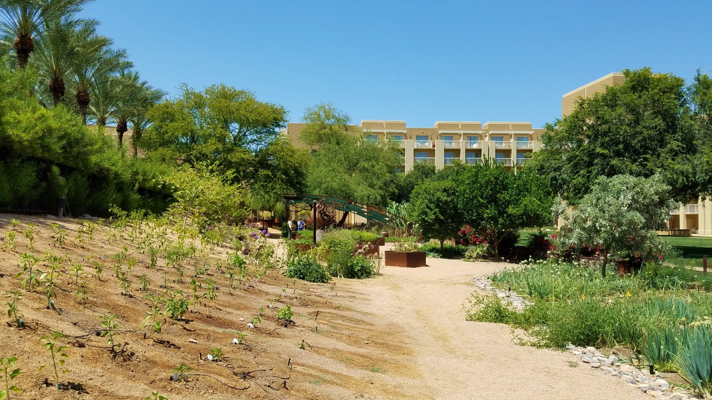 Garden JW Marriott Desert Ridge
