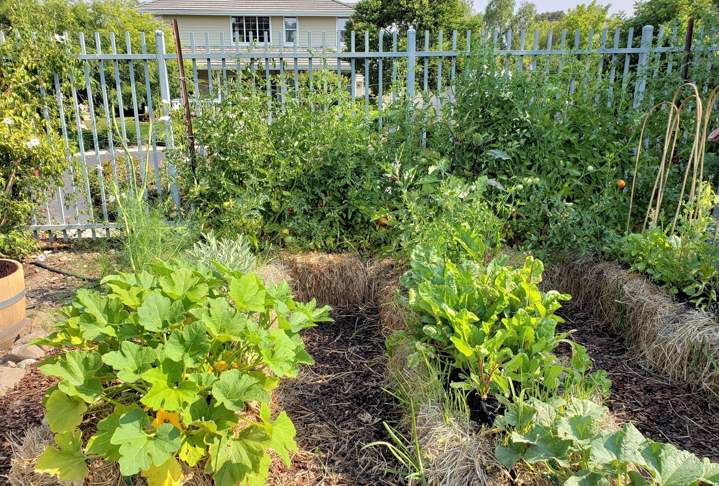 retzlaff garden.jpg
