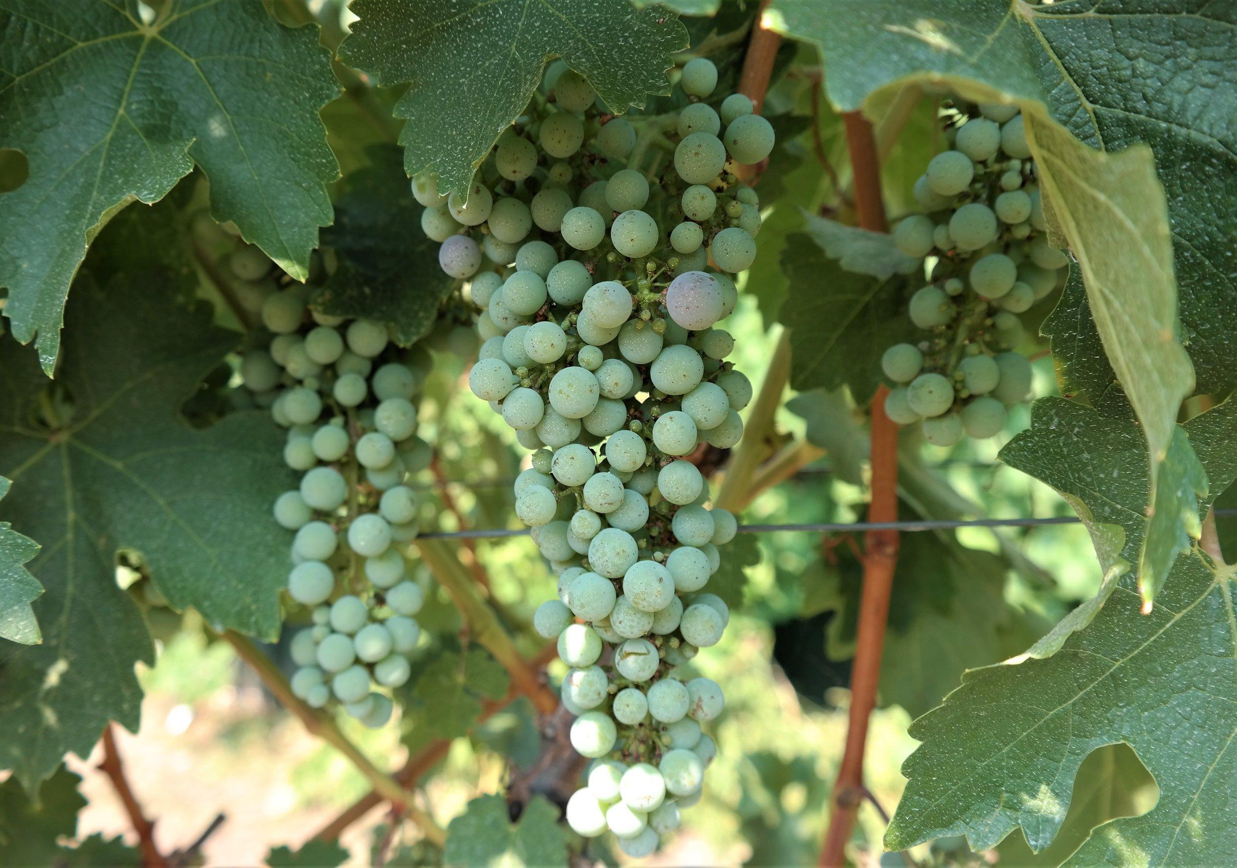 Retlzaff Vineyards