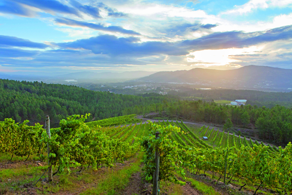 Rias Baixas vineyards image courtesy of Decanter Magazine
