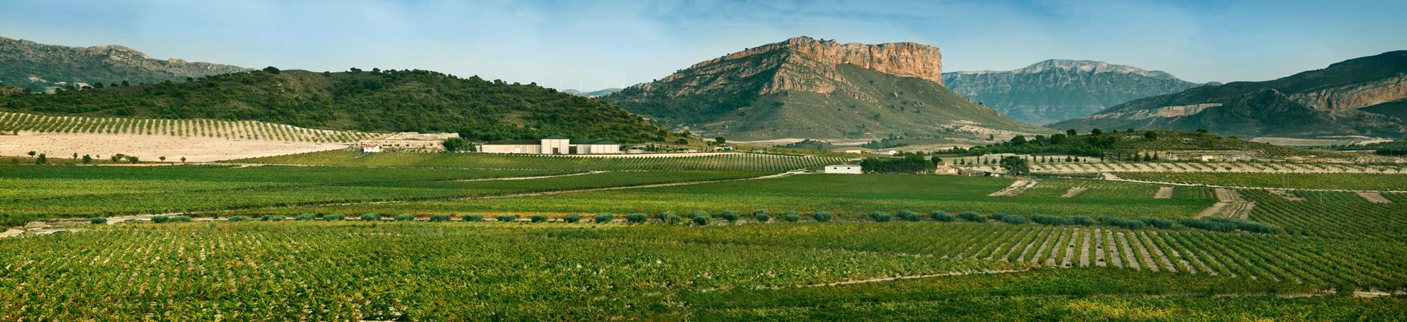 The vineyards of Bodegas Juan Gil