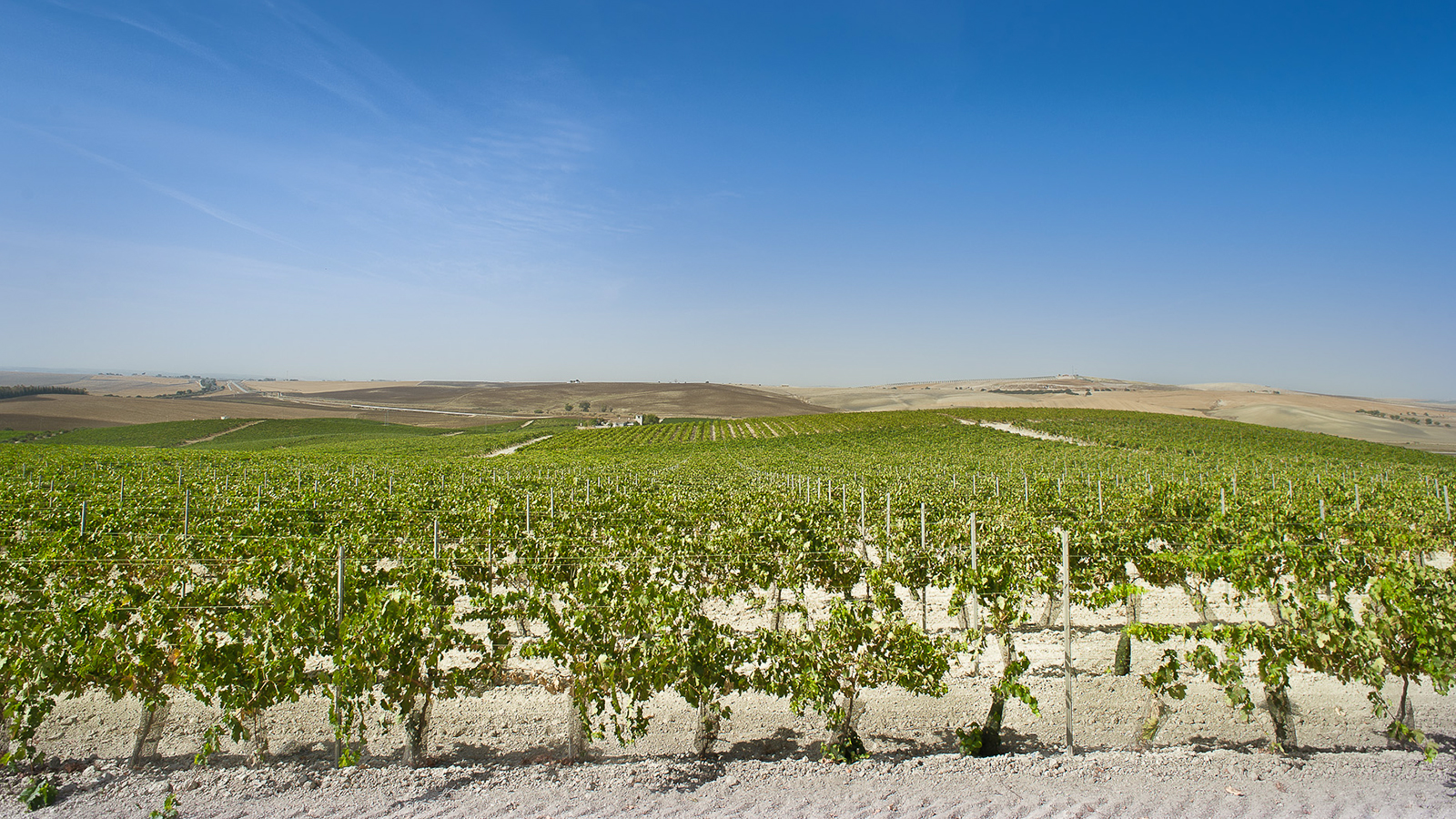 image courtesy of winespectator.com