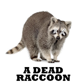 DEAD-RACCOON.jpg
