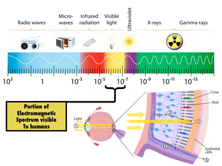 fig.1 -  Electromagnetic spectrum.