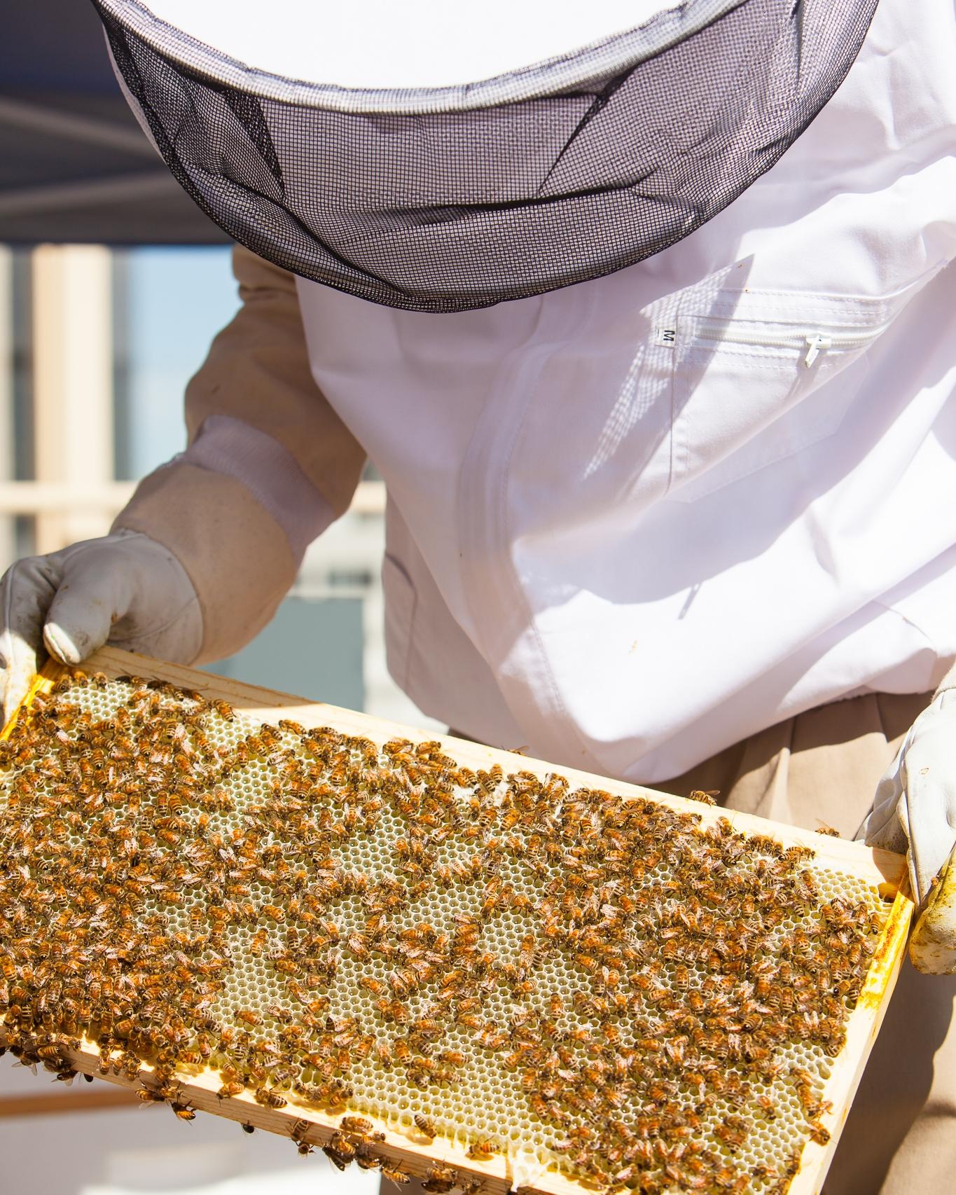 Beekeeper & Chef Jesper Jonsson; commissioned by  Modern in Denver . Photographer Jennifer Koskinen | Merritt Portrait Studio