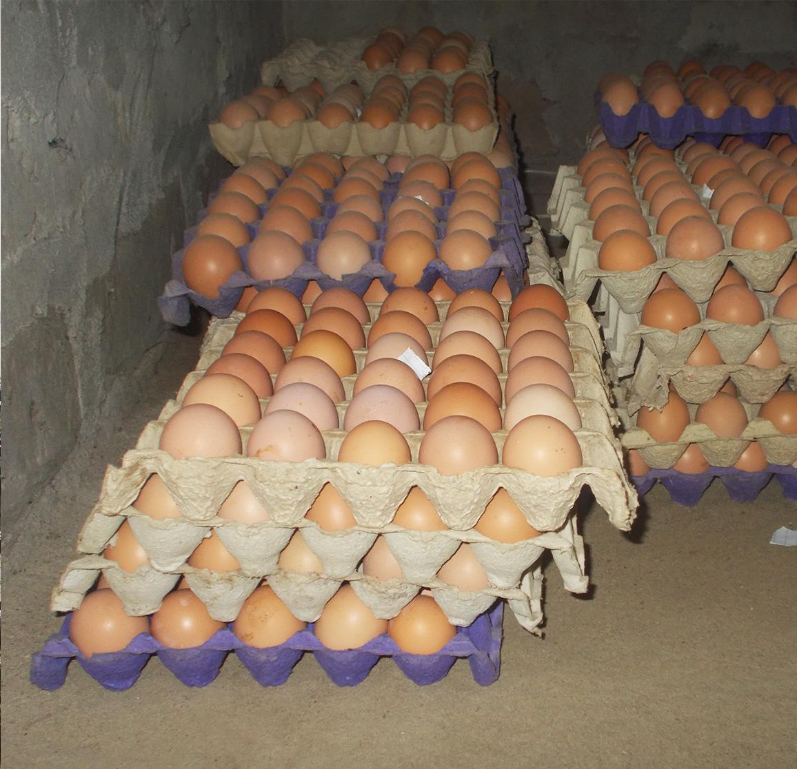 Das große ziel: nachhaltigkeit & selbst-versorgunG. - Auf der Insel Sherbro Island mit dem Ort Bonthe leben 10.000 Menschen, etwa 2000 Familien. Vom Ausbildungszentrum ausgehend werden die Menschen in der Region in Hühnerhaltung unterrichtet und mit eierlegenden Hühnern ausgestattet werden. Unser Ziel ist es, dass jede Familie vier Hühner und einen Hahn erhält. Die Familien sind auf diese Weise regelmäßig mit Eiern und – bei erfolgreicher Züchtung – auch mit Fleisch versorgt. Dies ist ein wichtiger Beitrag für eine nachhaltige Versorgung mit Nahrungsmitteln.