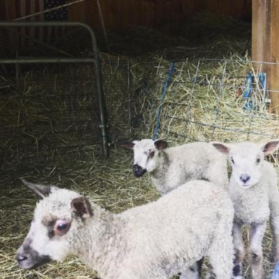 Oliver (left), Oscar (middle), Owen (right)