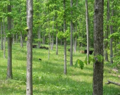 https://www.extension.umn.edu/environment/agroforestry/silvopasture/silvopasture.html