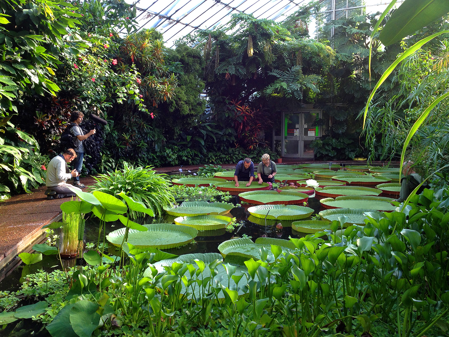 Filming in the Plants and People Glasshouse, Royal Botanic Garden Edinburgh