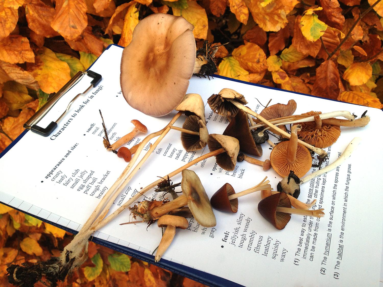 MushroomsWeb.jpg