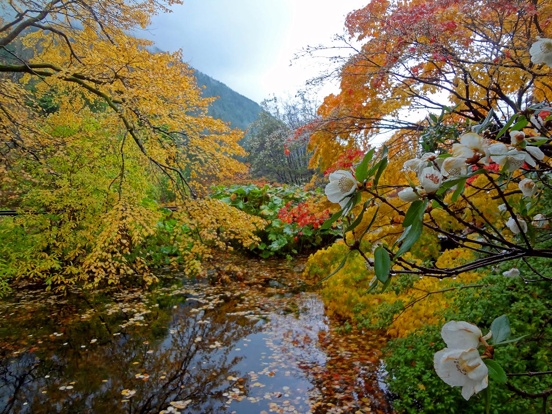 Benmore Botanic Garden, Dunoon, Scotland