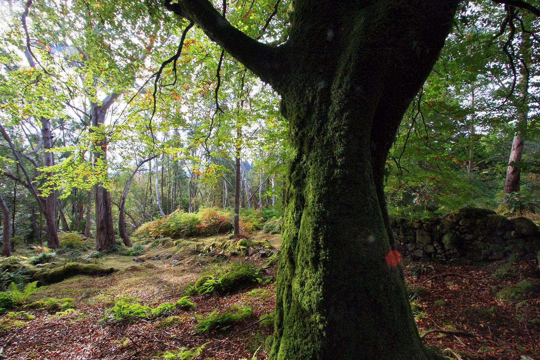 Crarae Garden, Inverary, Scotland