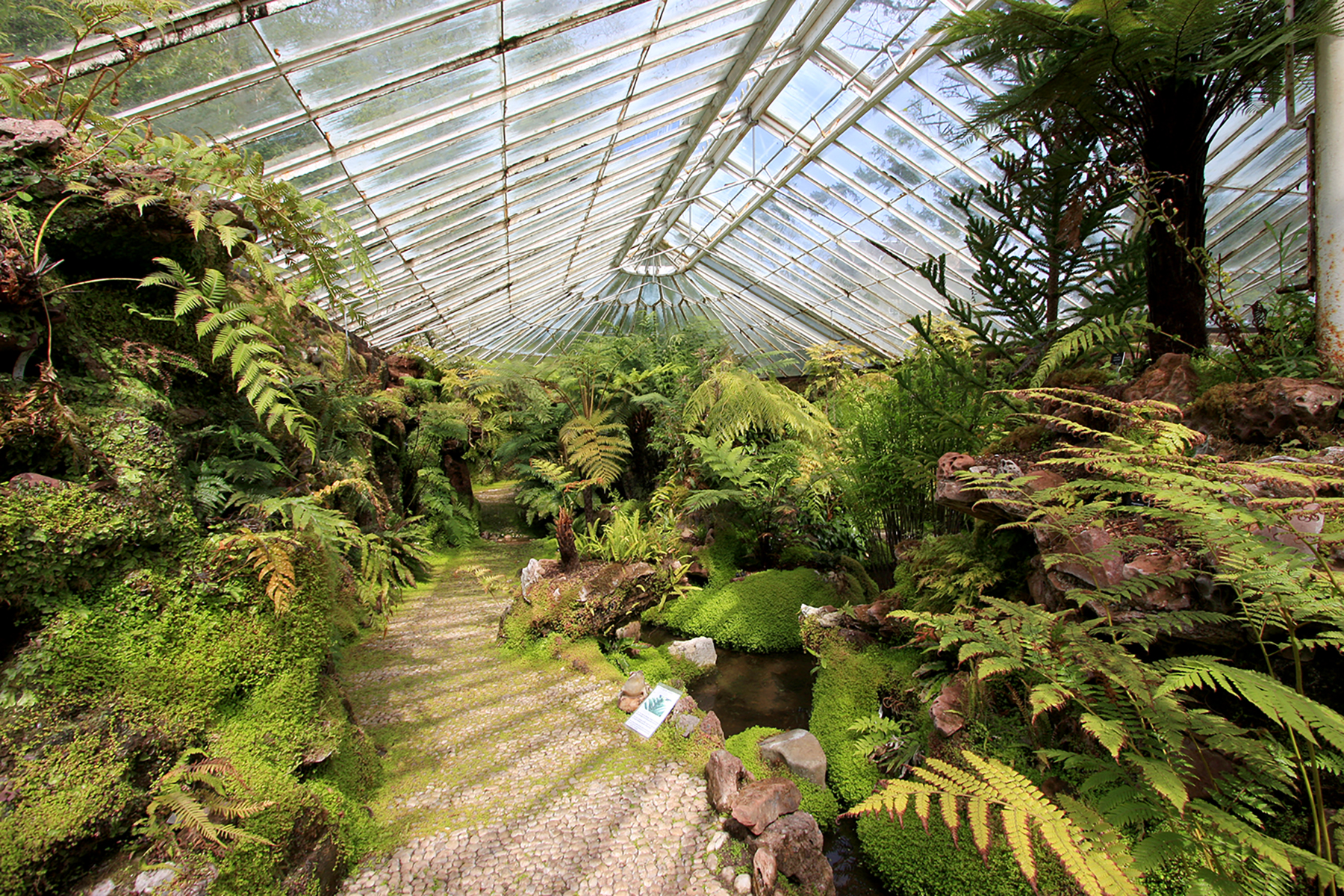 Ascog Hall Victorian Fernery, Isle of Bute, Scotland